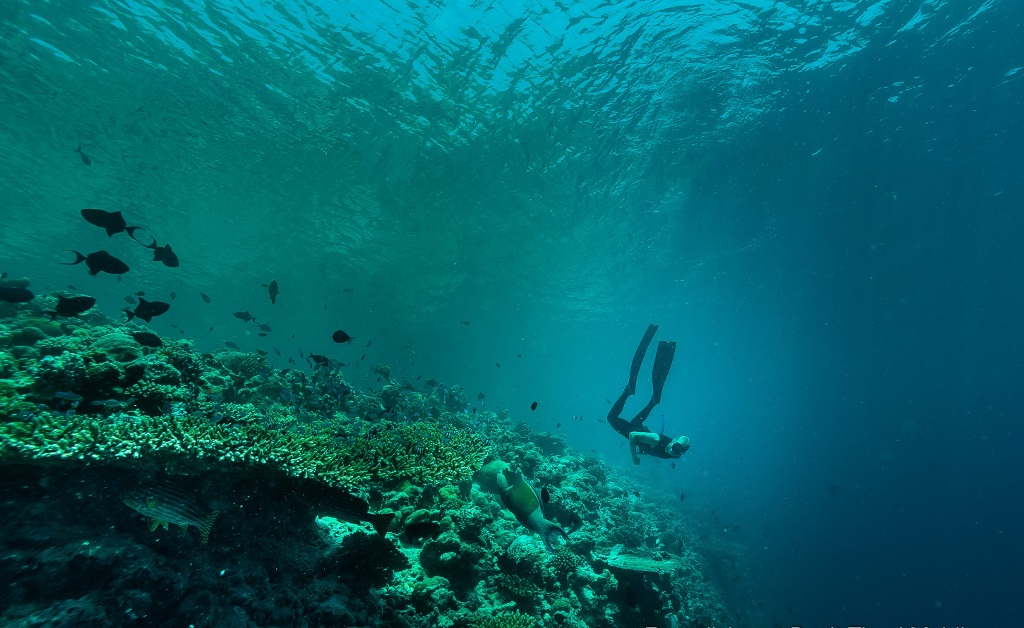 Free-diving at Dusit Thani Maldives 22