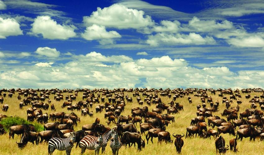 http://www.travelforsenses.com/wp-content/uploads/2015/06/Serengeti-Migration-Tanzania-850x500.jpg