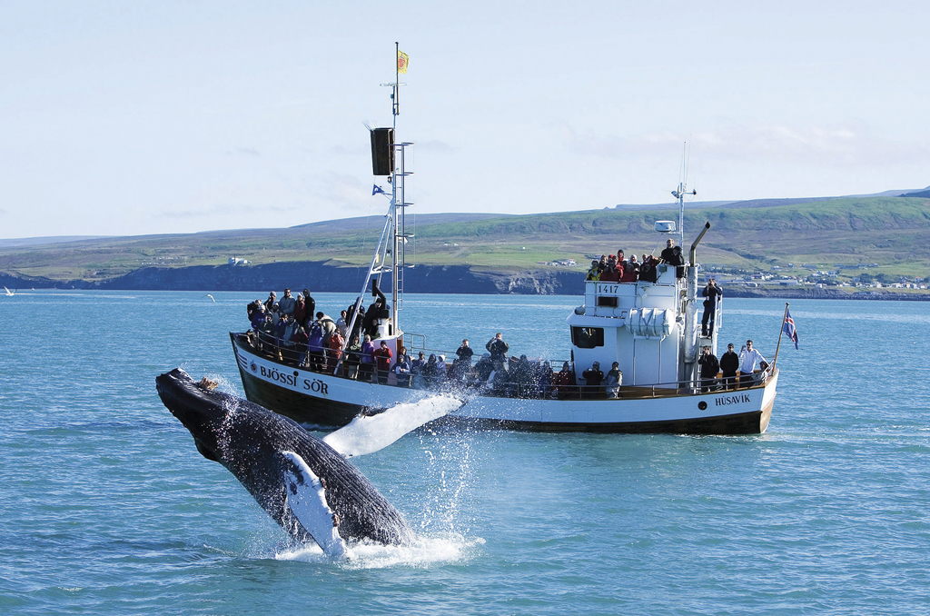 WHALE WATCHING ICELAND 2
