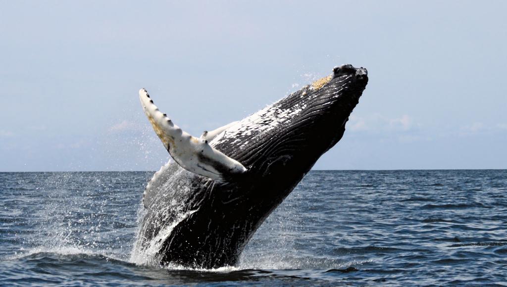 whale watching ireland