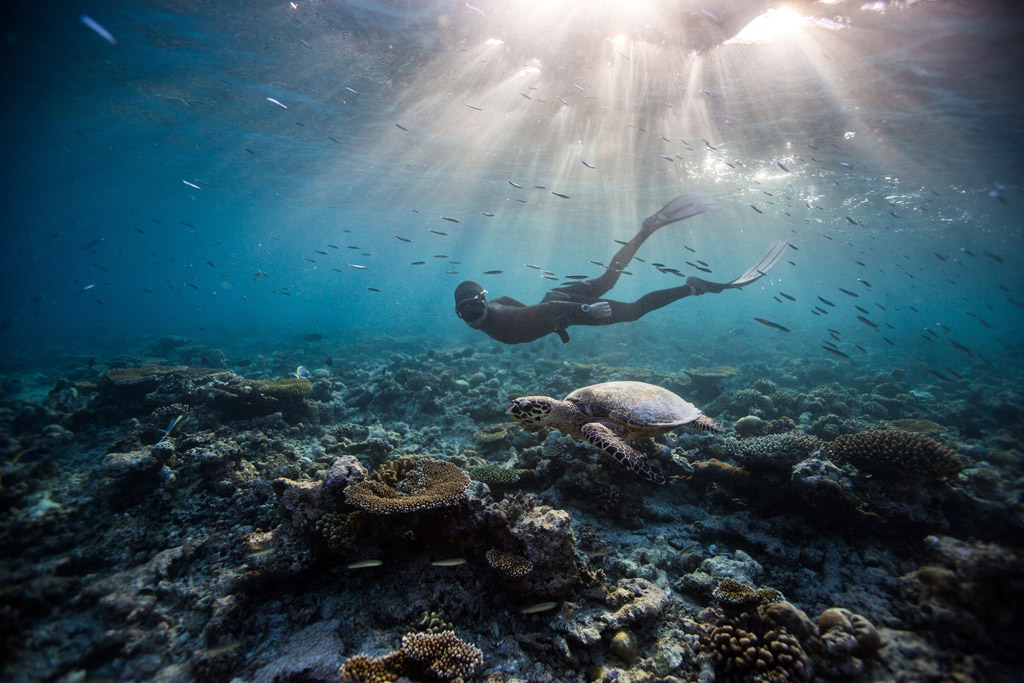freediving-with-turtle-in-the-house-reef-hi