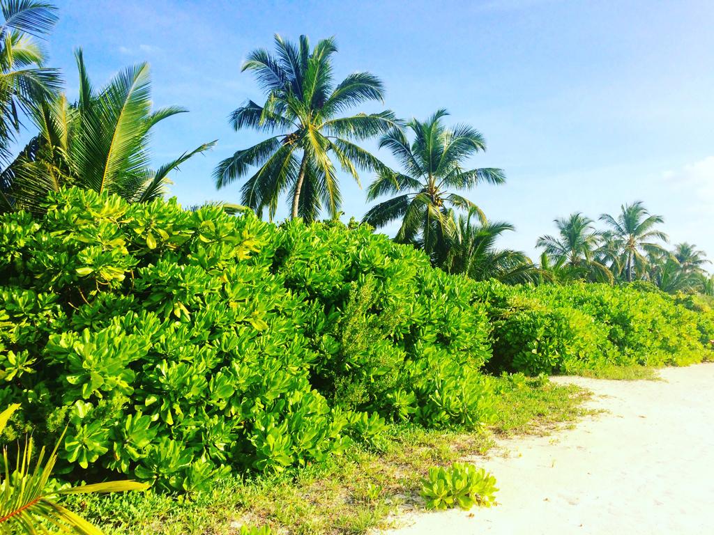 canareef maldives 16
