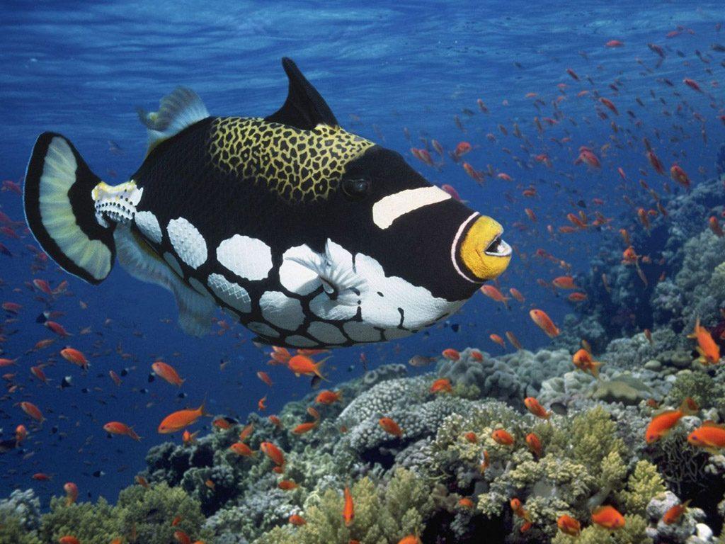 maldives reef 5