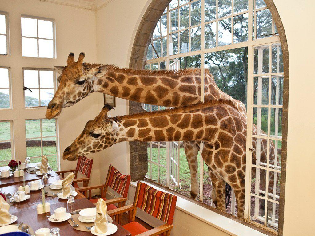 giraffe-manor-kenya-2